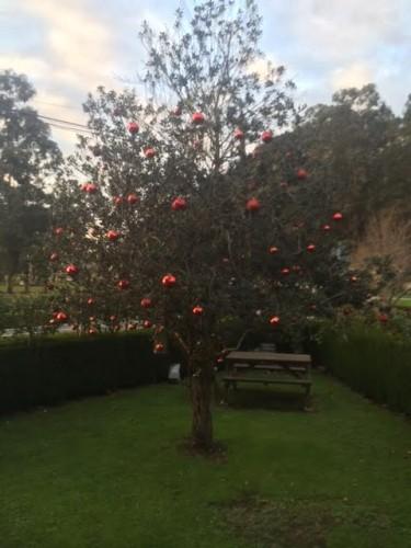 Árbol exterior de navidad