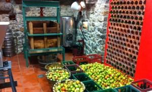 Elaborando mosto de manzana en el Rincón del Sella