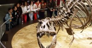 Visita al museo del Jurásico