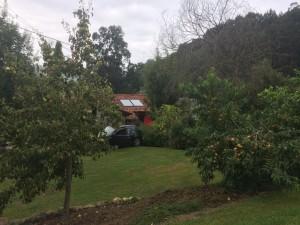 Arboles frutales del Rincón del Sella